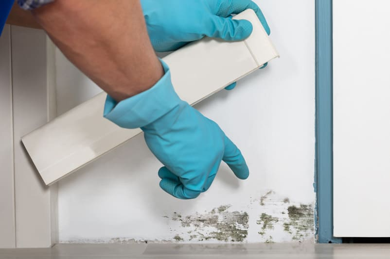 Southwest Florida Mold Remediation | Sunset Home Specialists
